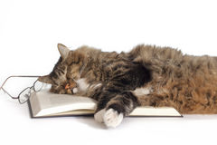 Cat Sleeping on Book. A cat sleeping on open book with reading glasses fallen to side on white background. A concept for how a good book may help one sleep stock photo