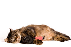 Cat is sleeping with a brush Stock Image
