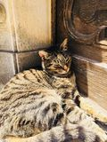 Cat sleeping. Calmly in the sun. Picture taken in Sintra, Portugal stock photography