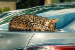 Cat is sleeping in a car Royalty Free Stock Photo