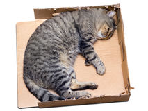 Cat sleeping in a cardboard box Royalty Free Stock Images
