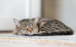 Cat sleeping on the carpet Stock Photos