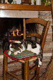 A cat sleeping on a chair Royalty Free Stock Photography