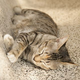 Cat sleeping on chair. Cat sleeping on a marble chair Stock Photo