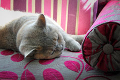 Cat sleeping on chaise Royalty Free Stock Image