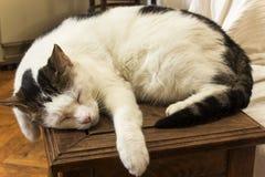 Cat sleeping Stock Image