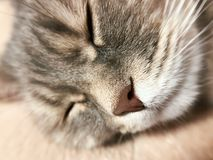 Cat sleeping in a comfortable chair at home Stock Photos