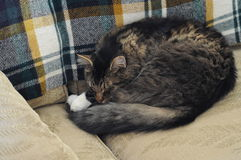 Cat sleeping on couch Royalty Free Stock Photography