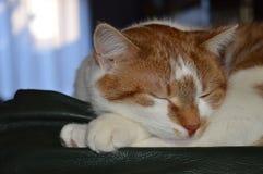 Cat Sleeping On The Couch fotos de archivo