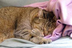 Cat sleeping on coverlet Royalty Free Stock Photo