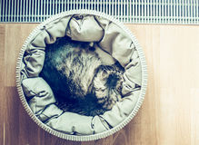 Cat sleeping curled up in basket  near a window on parquet floor, top view Stock Photo