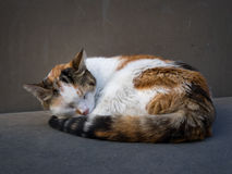 Cat sleeping curled up Stock Photos