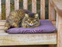Cat sleeping on cushion. Cat sleeping on purple cushion on park bench in England stock image