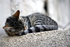 Cat Sleeping. Cute tabby cat sleeping on the wall. Selective focus royalty free stock photography
