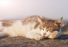 Cat sleeping Royalty Free Stock Photography