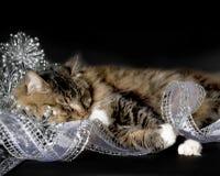 Cat Sleeping dans des décorations de Noël images libres de droits