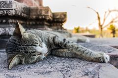 Cat Sleeping dans le temple photographie stock