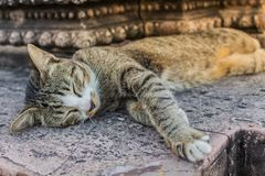 Cat Sleeping dans le temple images stock