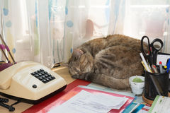 Cat sleeping at desk Stock Image