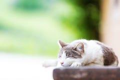 Cat Sleeping en banco con el espacio de la copia Fotografía de archivo