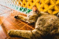 Cat Sleeping en el templo foto de archivo