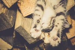 Cat Sleeping en la leña fotografía de archivo libre de regalías