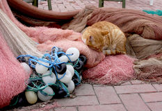 Cat sleeping on the fishing nets Stock Photography