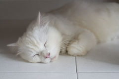 Cat Sleeping on the floor Royalty Free Stock Images