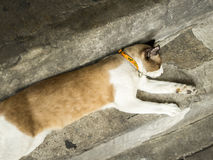 Cat is sleeping. The cat is sleeping on the floor, cement Stock Image