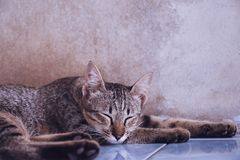 Cat sleeping on the floor at home. Comfortable Life Stock Photos