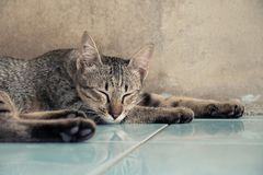 Cat sleeping on the floor at home. Comfortable Life Feeling Stock Images