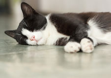 Cat sleeping on floor Stock Images