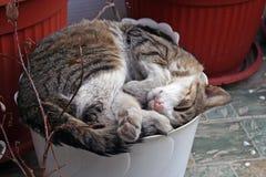 Cat. Sleeping in flowerpot Stock Image