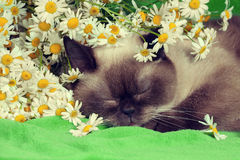 Cat sleeping in flowers Stock Images