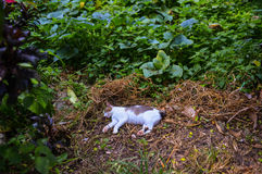 Cat sleeping in the forest royalty free stock photos