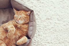 Cat sleeping royalty free stock photos