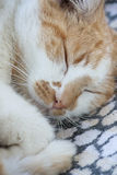 Cat sleeping. Ginger and white cat sleeping on a blanket Royalty Free Stock Photography