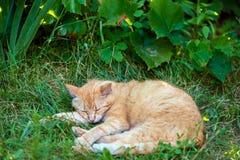 Cat sleeping on the grass stock image