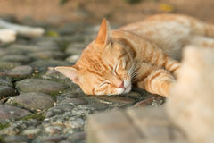 Cat. Sleeping on the ground Royalty Free Stock Photo