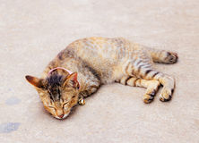Cat is sleeping on the ground Royalty Free Stock Images