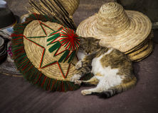 Cat sleeping among hats. A cat is sleeping on some hats. Taken in Marrakesh in 2017 at the Tombeaux Saadiens Royalty Free Stock Photos
