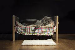Cat sleeping in her bed Royalty Free Stock Photo