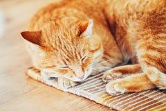 Cat Sleeping In His Bed roja en piso laminado imagenes de archivo