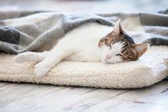 Cat sleeping at home Royalty Free Stock Photo