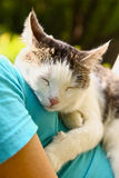 Cat sleeping on human body breast close up Stock Photos