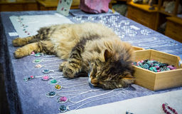 Cat sleeping on the jewelry Stock Photos