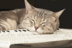 Cat sleeping on keyboard Royalty Free Stock Images