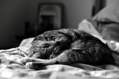 Cat. Sleeping kitten. bed. black and white picture. beautiful background Stock Photo