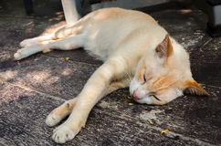 Cat sleeping Royalty Free Stock Photos