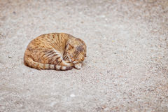 Cat sleeping like a circle. On the ground Royalty Free Stock Photography